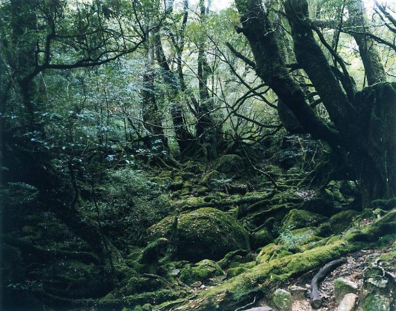 Thomas Struth – Paradise 13 (Yakushima, Japan), 1999