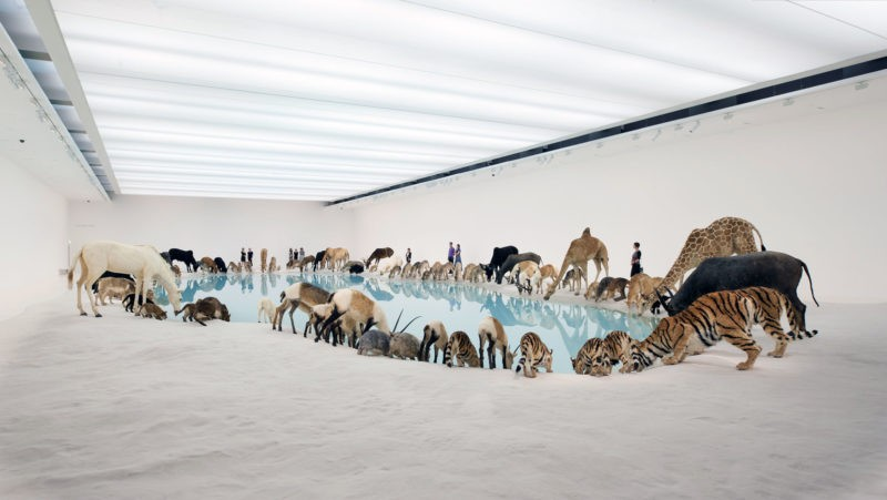 Cai Guo-Qiang – Heritage, 99 life-sized replicas of various animals, water, sand, Gallery of Modern Art, Brisbane, Australia, 2013