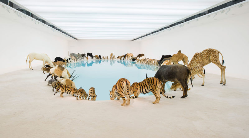Cai Guo-Qiang – Wateringhole (detail), 99 life-sized replicas of various animals, water, sand, Gallery of Modern Art, Brisbane, Australia, 2013
