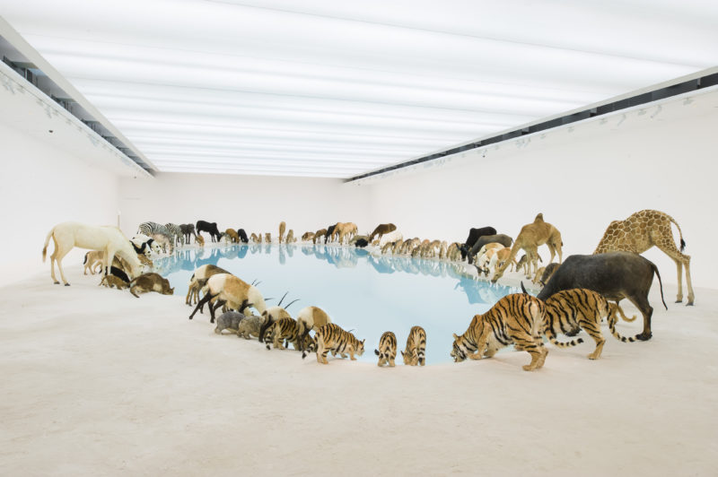 Cai Guo-Qiang - Wateringhole, 99 life-sized replicas of various animals, water, sand, 2013, Brisbane Gallery of Modern Art - 1