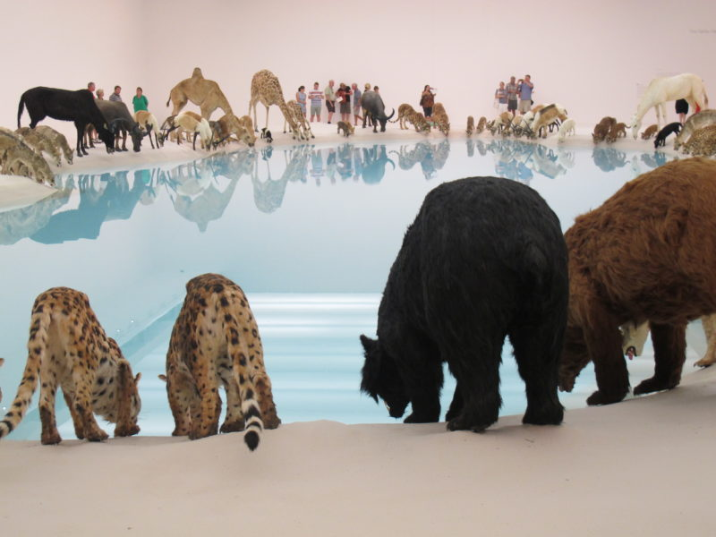 Cai Guo-Qiang - Heritage, Wateringhole, 99 life-sized replicas of various animals, water, sand, 2013, Brisbane Gallery of Modern Art