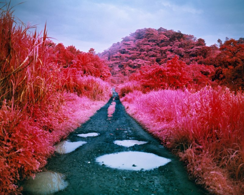 Richard Mosse - Before the Flood, 2015