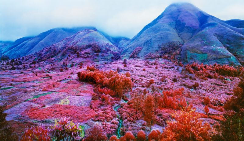 Richard Mosse - Everything Merges with the Night, 2015