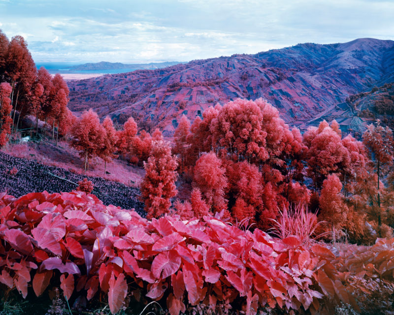 Richard Mosse - I Shall Be Released, 2015 - Digital c-print - 102cm x 127cm - Edition of five + 1AP