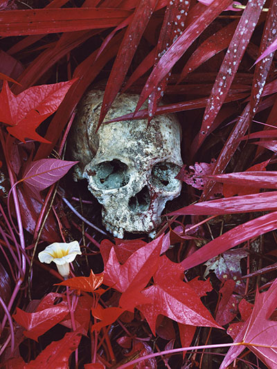 Richard Mosse's Enclave in Congo - Dreamlike & disturbing
