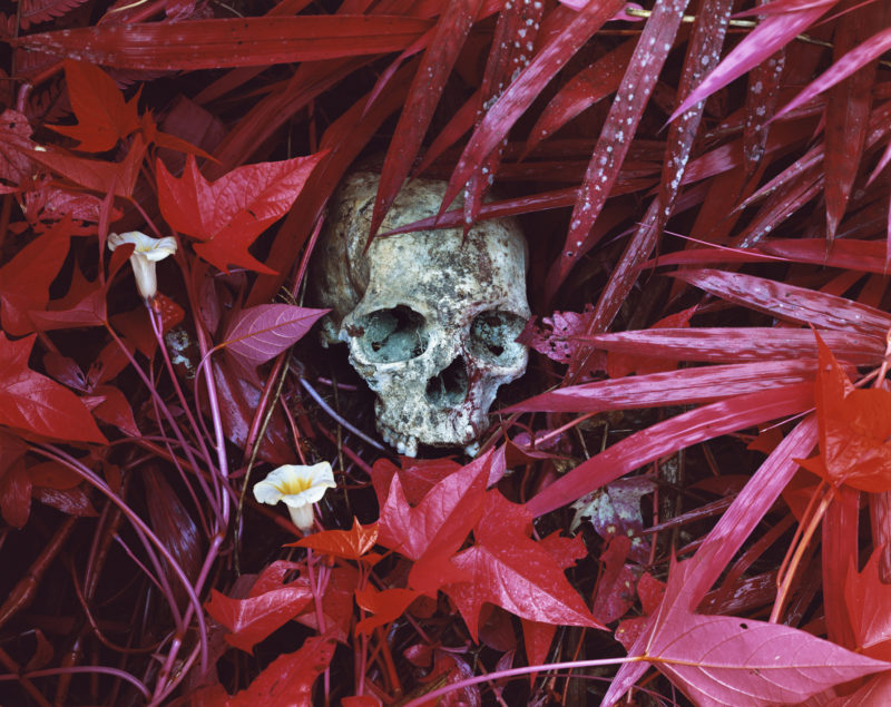 Richard Mosse - Of Lillies and Remains, North Kivu, eastern Congo, 2012, digital C print, 72 x 90 inches. Courtesy of the artist and Jack Shainman Gallery
