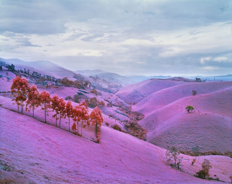 Richard Mosse - Sugar Ray, 2012