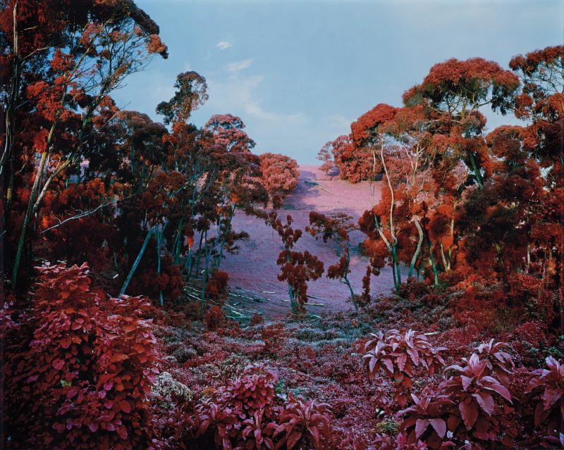 Richard Mosse - The Crystal World, 2011