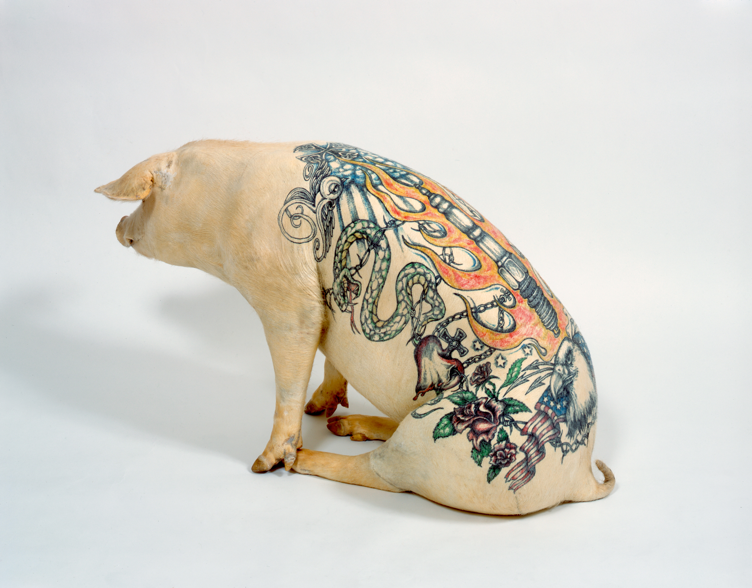 Wim Delvoye Is Tattooing Pigs Is This Cruel