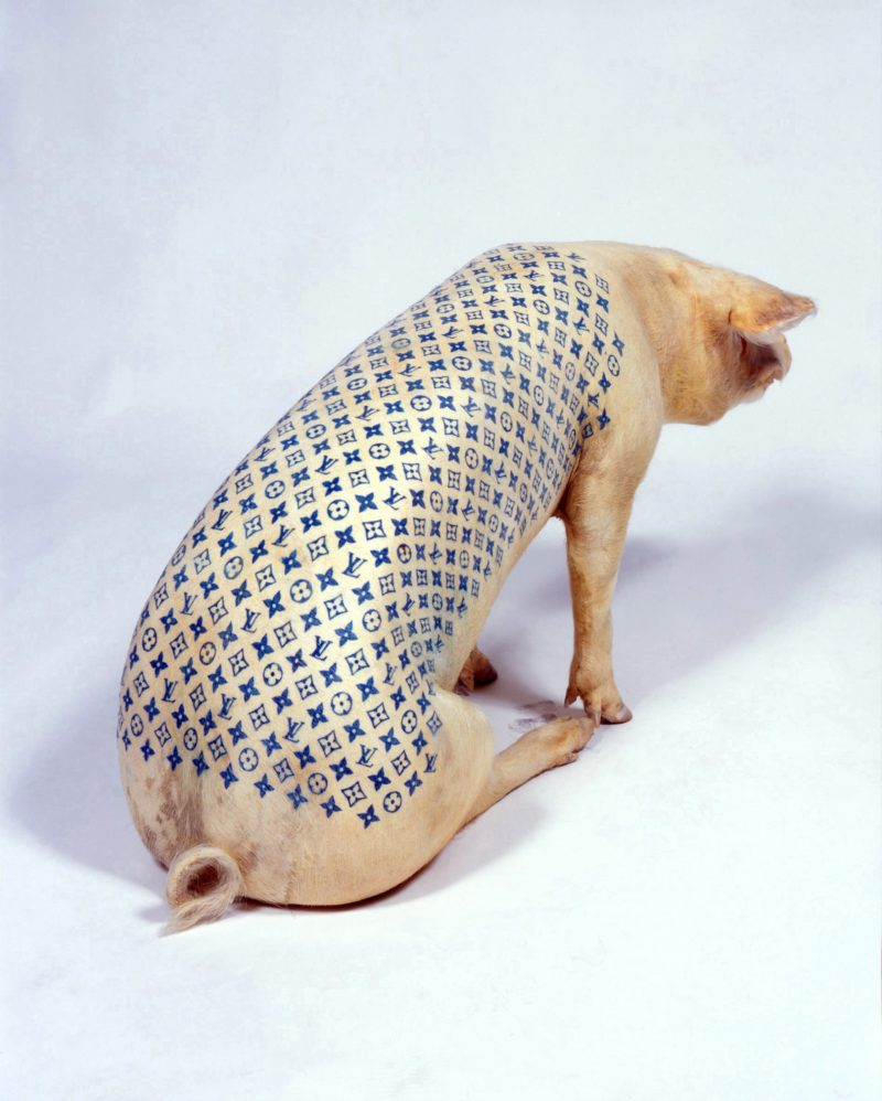 Wim Delvoye - Louis Vuttion tattooed on a pig
