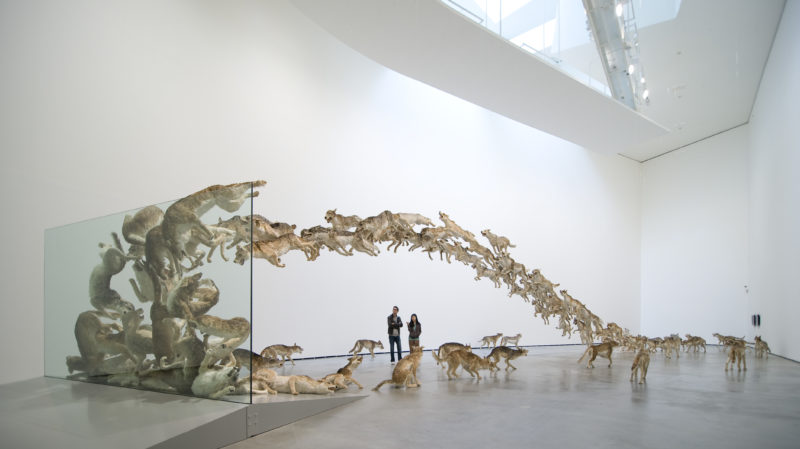 Cai Guo-Qiang, Head On, 2006, 99 life-sized replicas of wolves and glass wall, Guggenheim