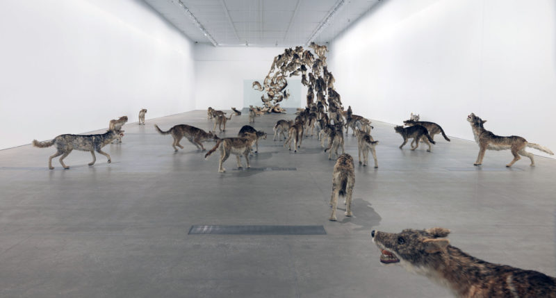 Cai Guo-Qiang, Head On, 2006, 99 life-sized replicas of wolves and glass wall