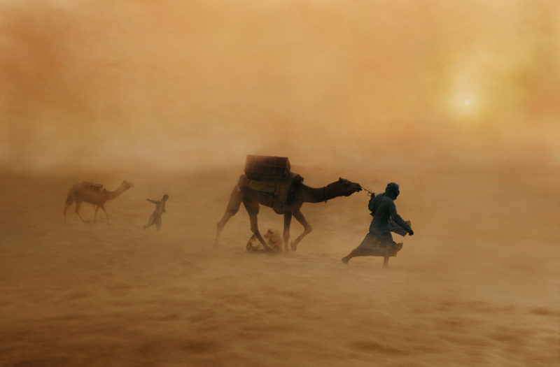 Steve McCurry - Camels in dust storm, India, 2010