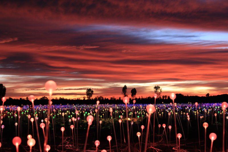 Bruce Munro - Field of Light, 50,000 spheres of light, 2016
