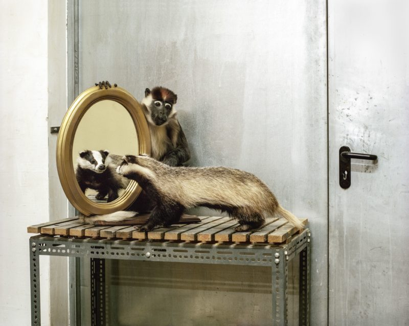 Klaus Pichler - Badger and money at the Museum of Natural History, Vienna, 2010, from Skeletons in the Closet