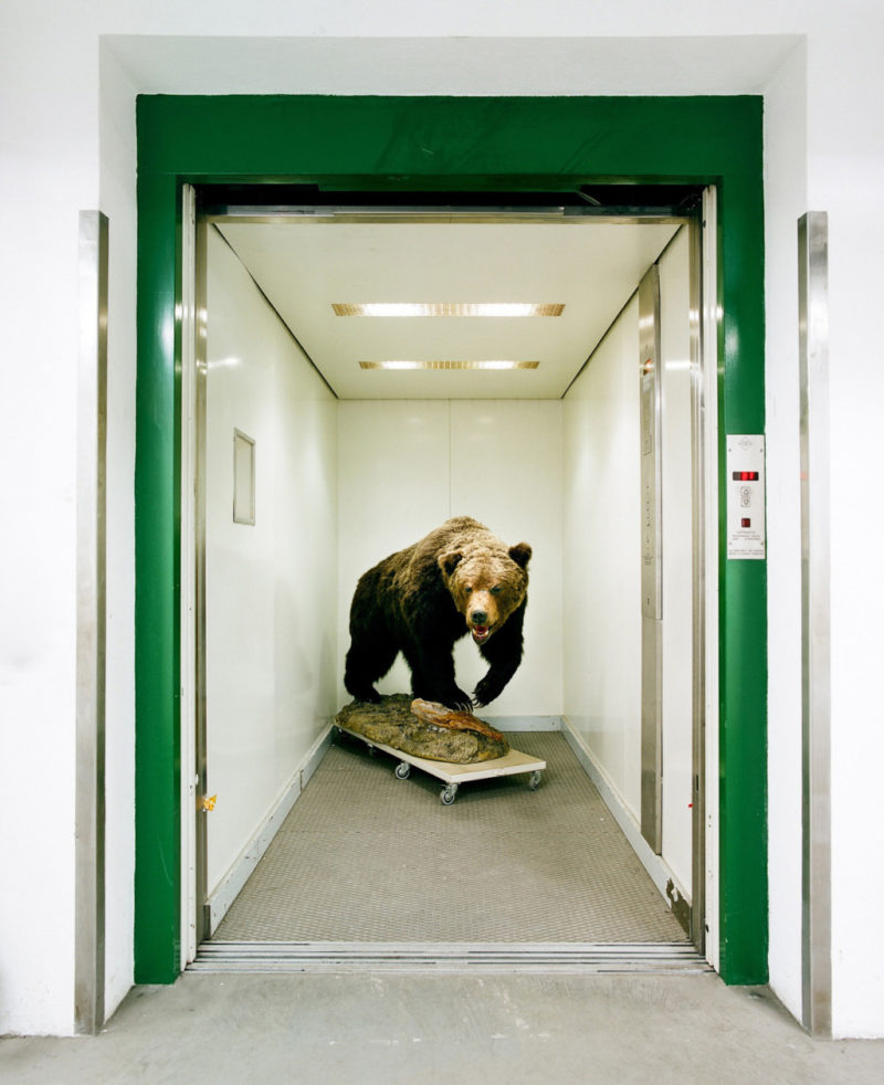 Klaus Pichler - Bear in the elevator of the Museum of Natural History, Vienna, 2010, from Skeletons in the Closet, from Skeletons in the Closet