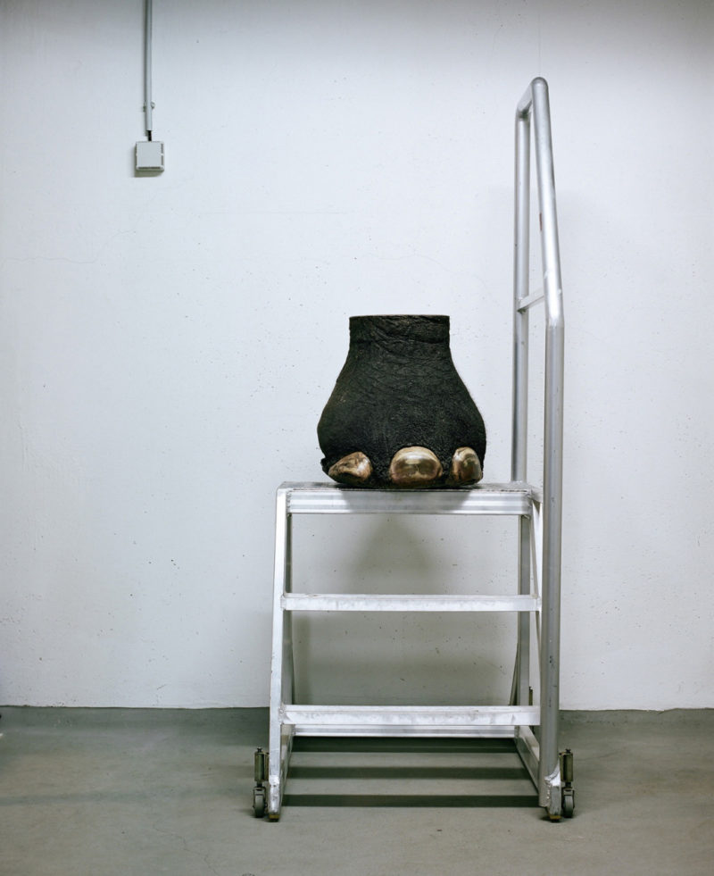 Klaus Pichler - Elephant hoof at the Museum of Natural History, Vienna, 2010, from Skeletons in the Closet