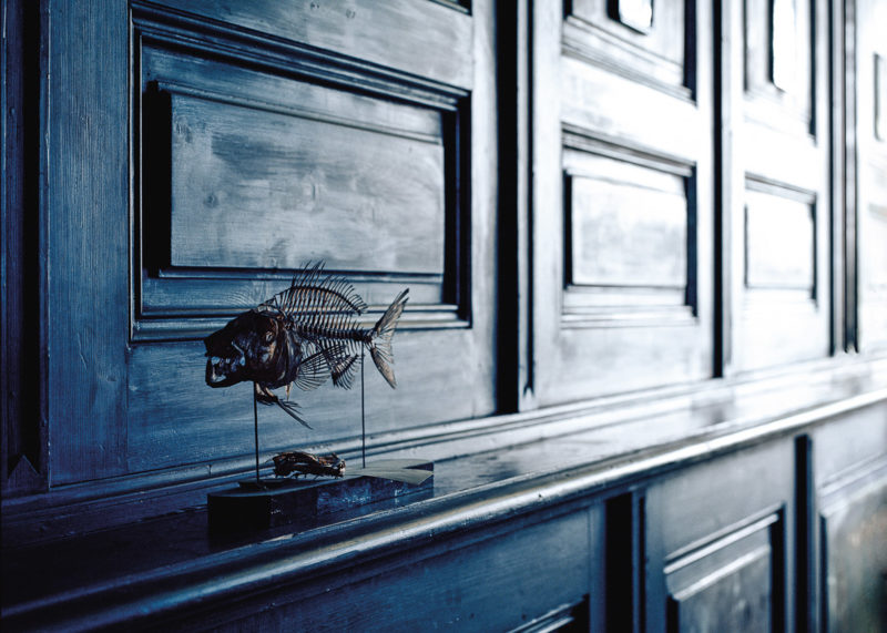 Klaus Pichler - Fish skeleton at the Museum of Natural History, Vienna, 2010, from Skeletons in the Closet