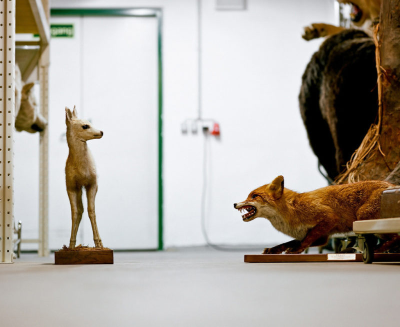 Klaus Pichler - Fox and baby deer at the Museum of Natural History, Vienna, 2010, from Skeletons in the Closet