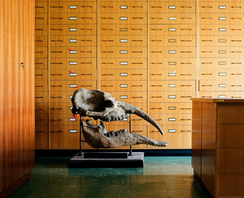 Klaus Pichler - Mastodon skull at the Museum of Natural History, Vienna, 2010, from Skeletons in the Closet