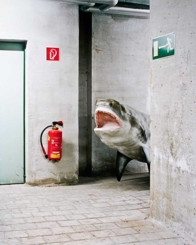 Klaus Pichler - Shark at the Museum of Natural History, Vienna, 2010, from Skeletons in the Closet