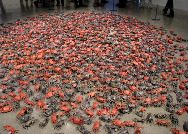 Ai Weiwei - He Xie (crabs), 3200 porcelain crabs, installation view, Art Gallery of Ontario, 2013