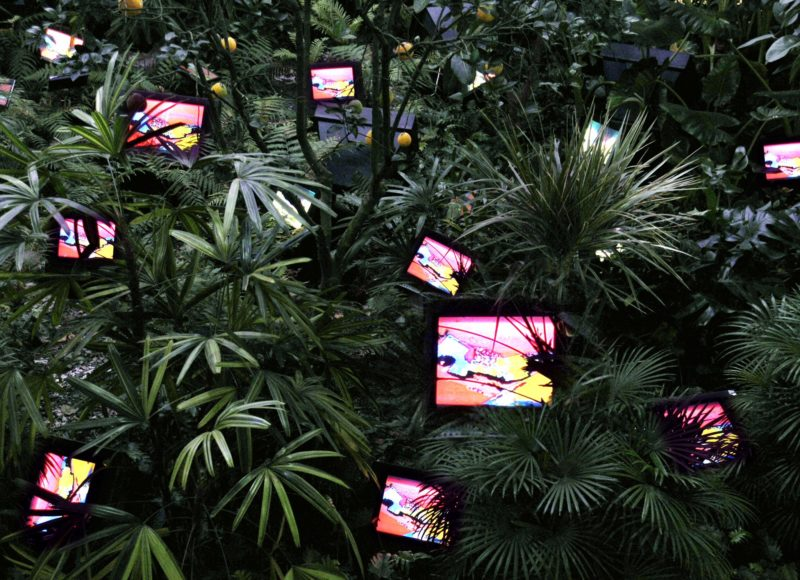 Nam June Paik - TV Garden, 1974 (2002 Version), video installation with color television sets and live plants, dimensions vary with installation 4