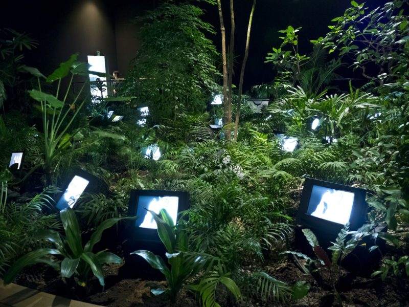 Nam June Paik - TV Garden, 1974, video installation with color television sets and live plants, dimensions vary with installation
