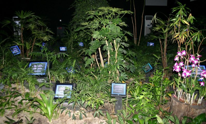 Nam June Paik - TV Garden, 1974, video installation with color television sets and live plants, dimensions vary with installation, Nam June Paik Art Center, Yongin, South Korea