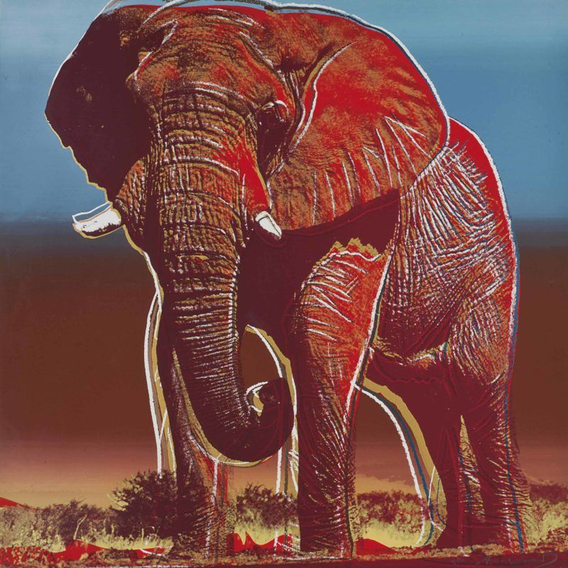 Andy Warhol – African Elephant, 1983, from Endangered Species, screenprint, 96,5 x 96,2 cm (38 x 37 7/8 in.)
