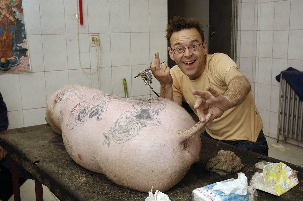 Wim Delvoye tattooing a pig