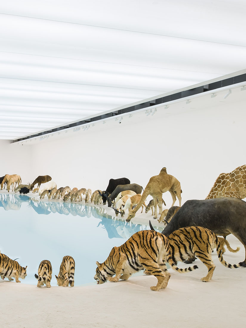 99 life-sized replicas of animals in large installation
