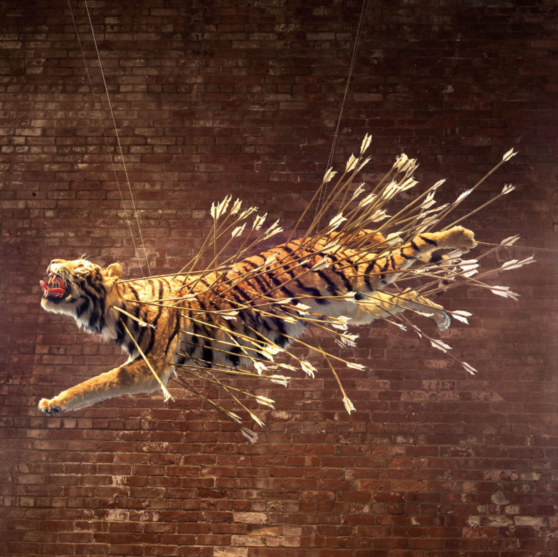 Cai Guo-Qiang – Inopportune Stage One, 2004, nine life-sized tiger replicas, arrows
