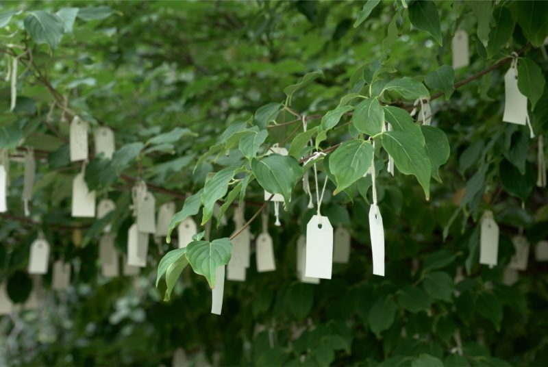 Yoko Ono - Wish Tree for Washington, DC, 2007, Hirshhorn Museum and Sculpture Garden, Smithsonian Institution, Washington, D.C.