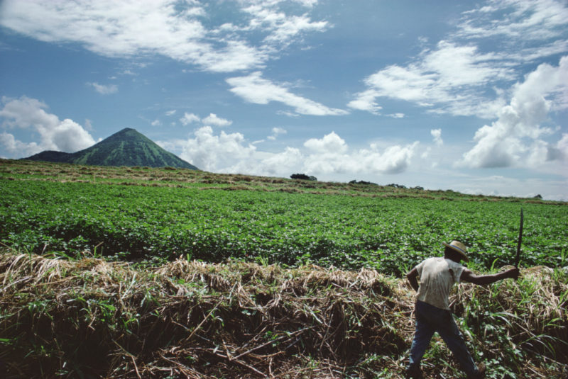 Susan Meiselas - Harvesting sugar cane near Leon. Nicaragua, 1979