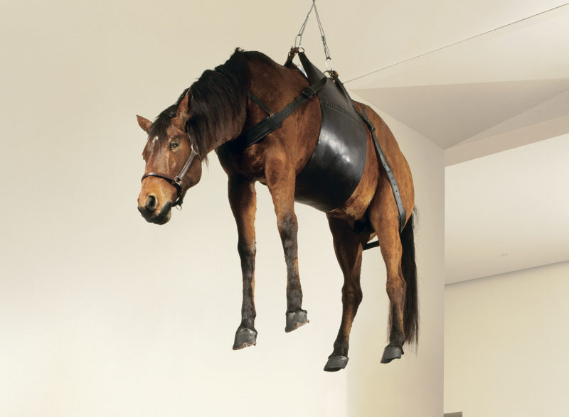Maurizio Cattelan - The Ballad of Trotsky, 1996, taxidermized horse, leather saddlery, rope, pulley Grandeur nature, 270 x 200 x 75 cm, Fondation Louis Vuitton