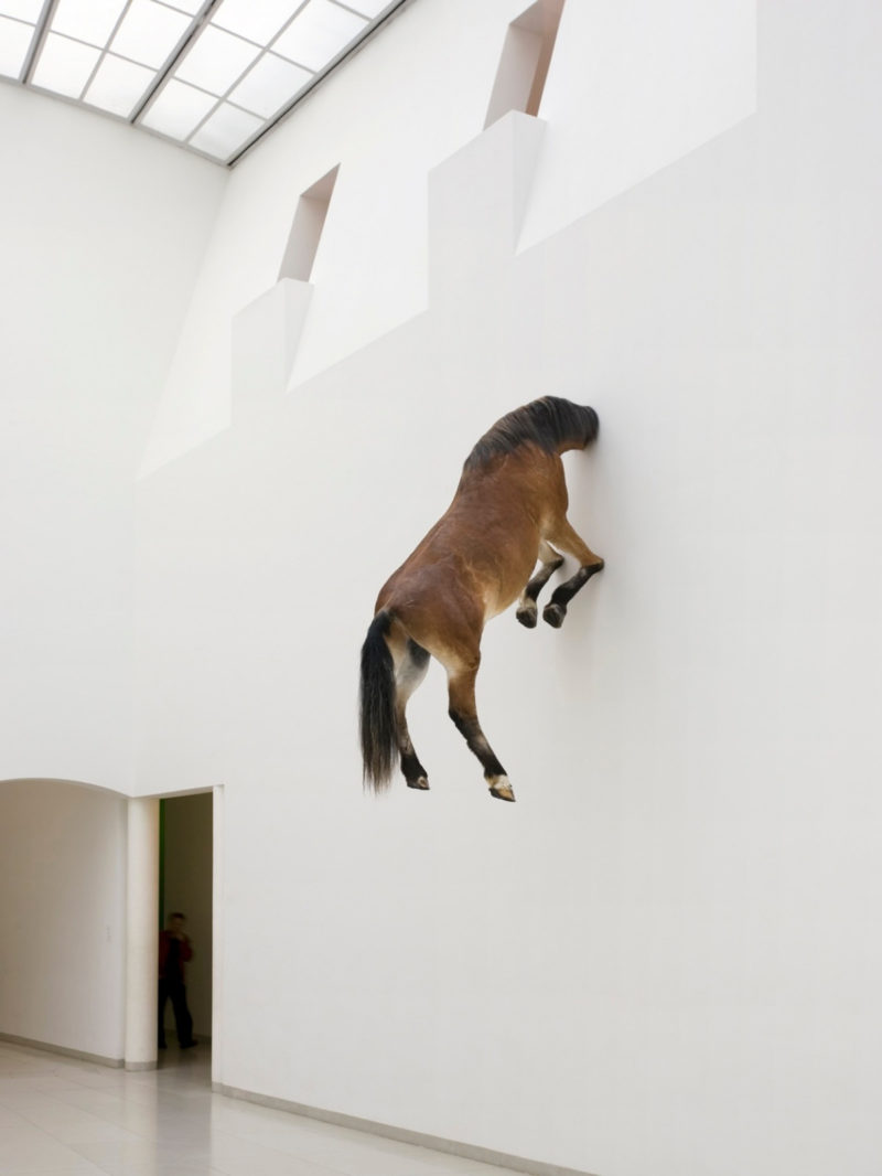 Maurizio Cattelan - Untitled, 2007, taxidermied horse, 300 x 170 x 80 cm, installation view, Museum für Modern Kunst, Frankfurt, Germany