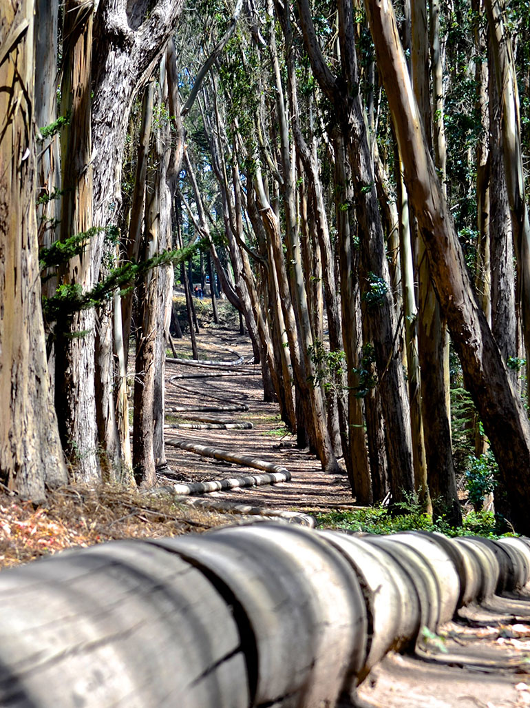 Why you should explore Andy Goldsworthy's Wood line