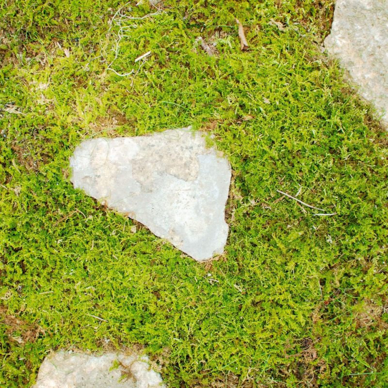 Moss used in Junya Ishigami's Water Garden, 2018, Nasu Mountains, Tochigi Prefecture, Japan