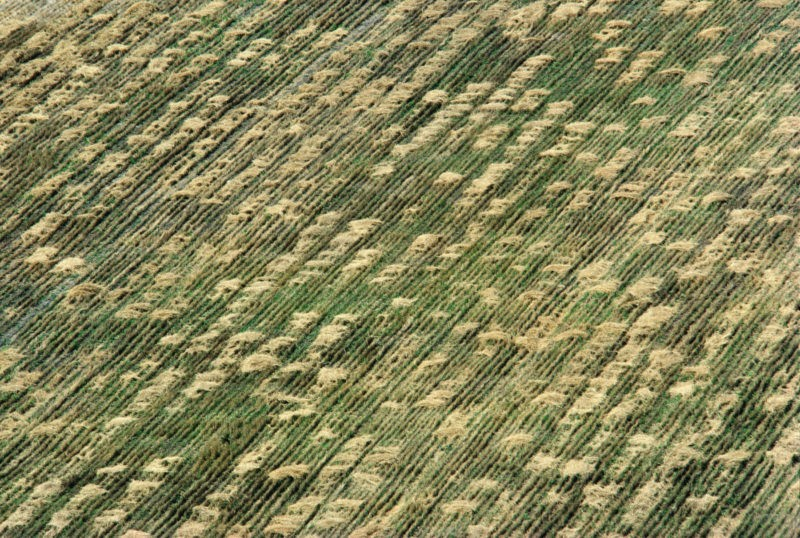 Aerial view of Agnes Denes - Wheatfield - A Confrontation, 1982, Battery Park Landfill, Downtown Manhattan