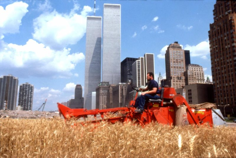 Agnes Denes - Wheatfield - A Confrontation, 1982, The Harvest, Battery Park Landfill, Downtown Manhattan