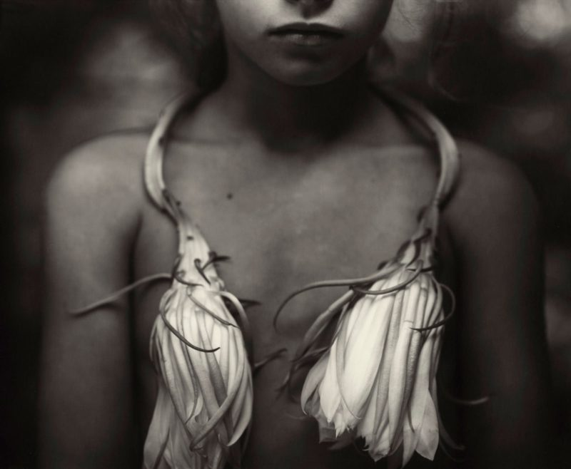 Sally Mann - Night-blooming Cereus, 1988, from Immediate Family