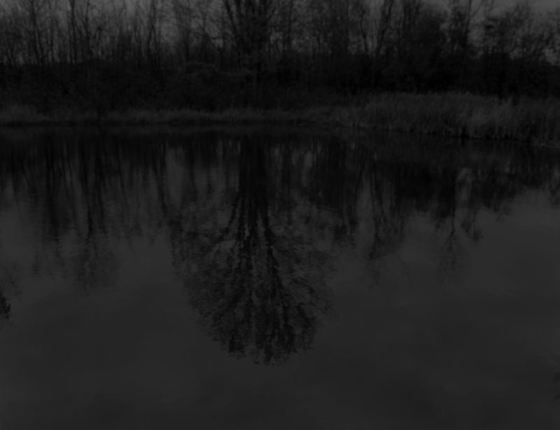 Dawoud Bey - Untitled #13 (Trees and Reflections), from the series Night Coming Tenderly, Black, 2017