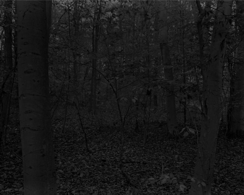 Dawoud Bey - Untitled #15 (Forest with Small Trees), from the series Night Coming Tenderly, Black, 2017