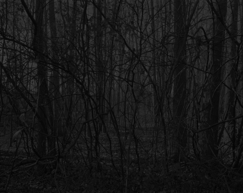 Dawoud Bey - Untitled #17 (Forest), from the series Night Coming Tenderly, Black, 2017