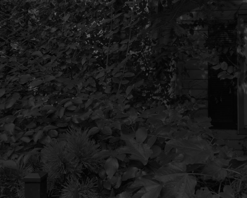 Dawoud Bey - Untitled #8 (Leaves and House), from the series Night Coming Tenderly, Black, 2017