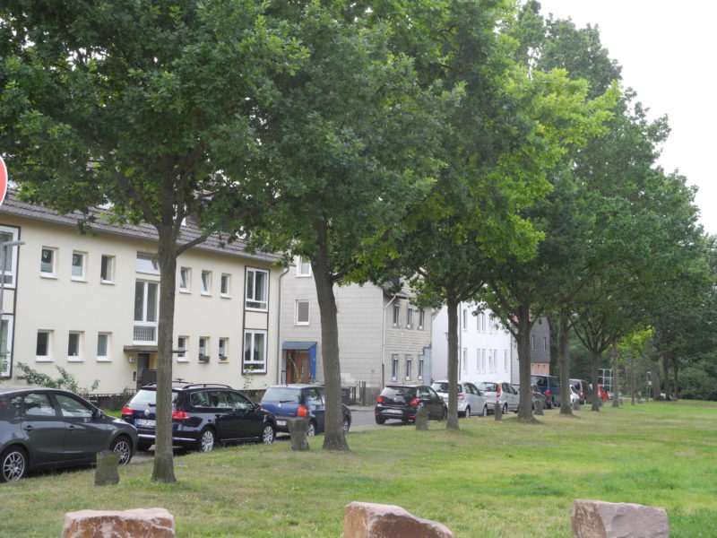 Joseph Beuys - <em>7000 oaks - Urban forest instead of city administration (7000 Eichen - Stadtverwaldung statt Stadtverwaltung)</em>, planted in 1986, started in 1982 at documenta 7 in Kassel, Germany, social sculpture, Wahlershäuser Straße, Kassel, Germany
