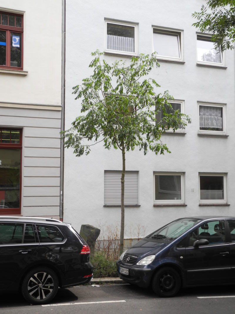 Joseph Beuys - <em>7000 oaks - Urban forest instead of city administration (7000 Eichen - Stadtverwaldung statt Stadtverwaltung)</em>, planted in 1986, started in 1982 at documenta 7 in Kassel, Germany, social sculpture, Dörnbergstraße, Kassel, Germany